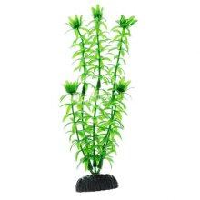 Элодея зеленая BARBUS Plant 004 10 см